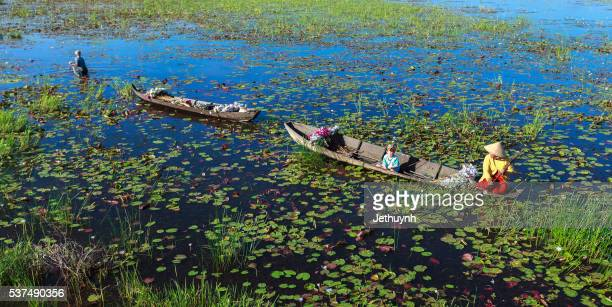 people boating on pond harvest and collecting water lilies - vietnam fotografías e imágenes de stock