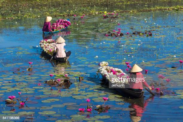 people boating on pond harvest and collecting water lilies