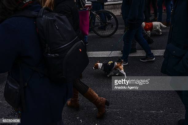 People bring their dogs during a protest held in solidarity with the Washington DC Women's March in Dublin Ireland on January 21 2017