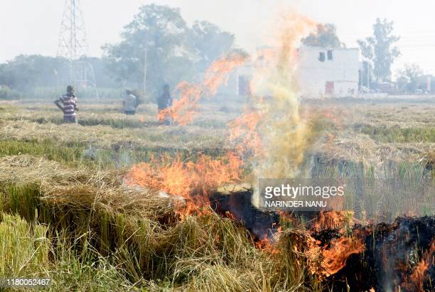 People burn straw stubble after harvesting paddy crops in a field near Attari village, some 35 km from Amritsar on November 5, 2019. - India's top...