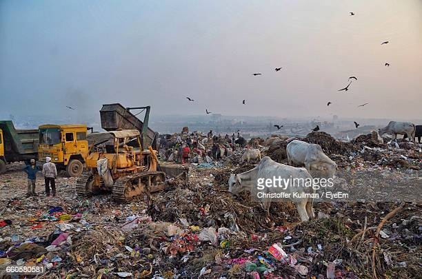 60 Top Garbage Dump Pictures, Photos, & Images - Getty Images
