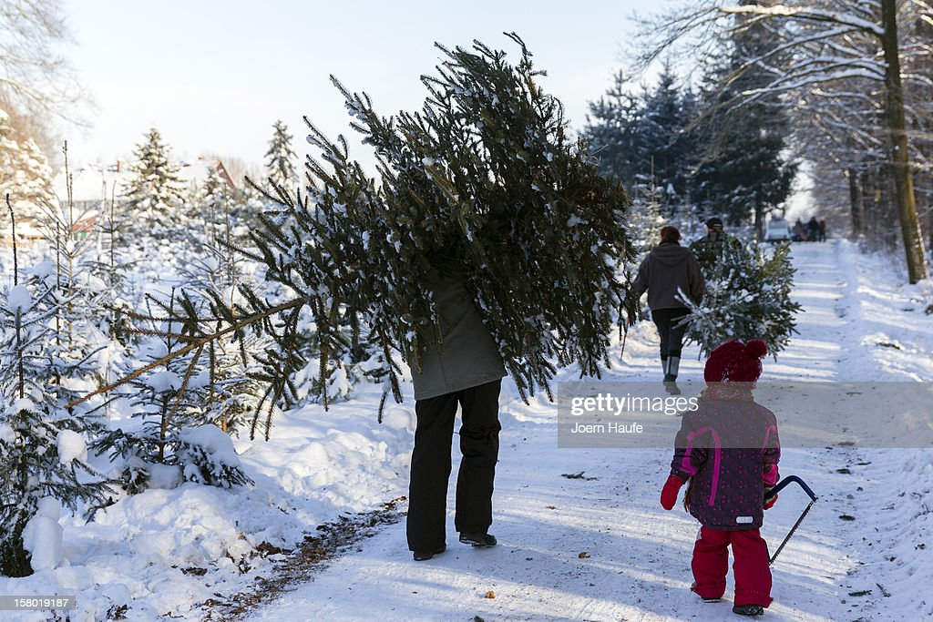 People carry Christmas trees they chose and cut down in a forest on December 8, 2012 in Fischbach, Germany. Forestry officials in the state of Saxony officially opened the 2012 Christmas tree season for people who want to retrieve their tree from designated forests rather than just buying it readily cut.