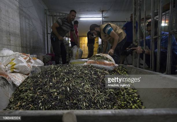 People carry olives which were picked from an olive tree to distribute to the ones in need at the Masjid alAqsa Compound to a facility in Jerusalem...