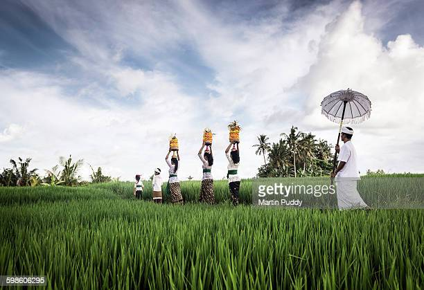 people carrying offerings through rice paddy