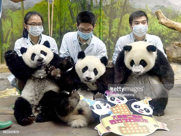 People celebrate first birthday of the world's only panda triplet cubs on July 29 2015 in Guangzhou China Feature China / Barcroft Media