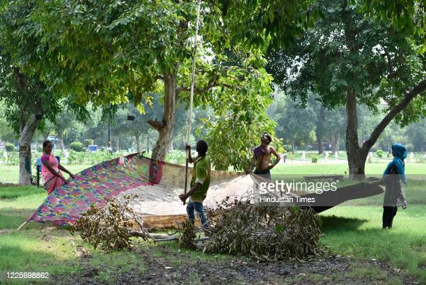 People collect Indian blueberries at India Gate lawns, on July 8, 2020 in New Delhi, India.