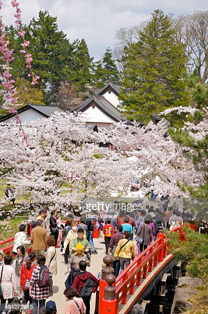 people crossing bridge in cherry blossom festival - hirosaki stock pictures, royalty-free photos & images
