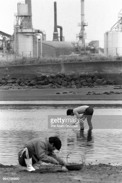 People dig clams at Minamatagawa River 30 years after mercury poisoning recognised on April 13 1986 in Minamata Kumamoto Japan