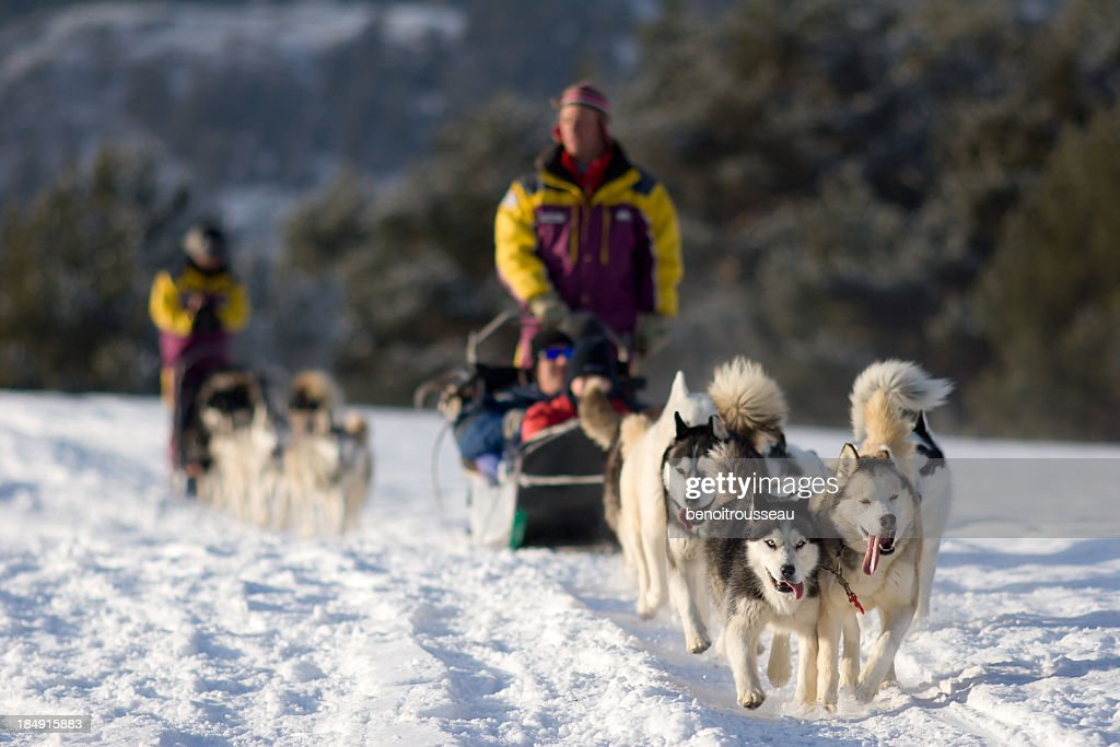 People Dog Sledding in Winter Near Mountains : Stock Photo