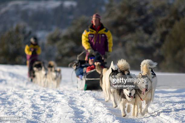 People Dog Sledding in Winter Near Mountains