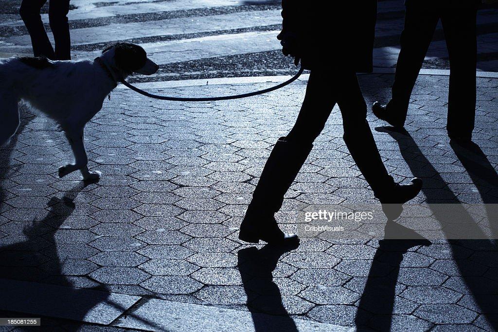People dog walking in blue night shadows : Stock Photo