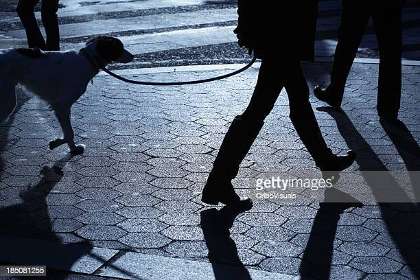 people dog walking in blue night shadows - riem persoonlijk accessoire stockfoto's en -beelden