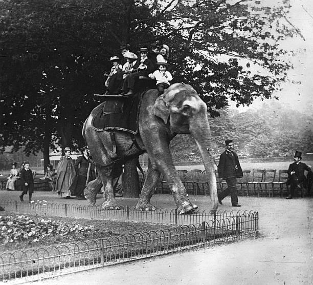 People enjoy an elephant ride in Regents Park, 1900....