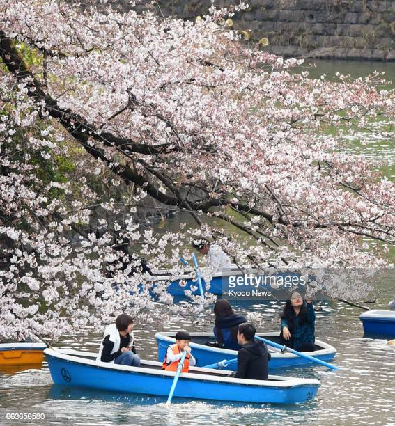 People enjoy cherry blossoms from boats in Chidorigafuchi a moat in central Tokyo on April 2 as the weather agency announced cherry trees had reached...