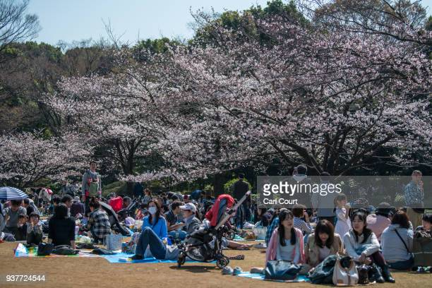 People enjoy hanami picnics next to cherry blossom in Kitanomaru Park on March 25 2018 in Tokyo Japan The Japanese have a longheld tradition of...