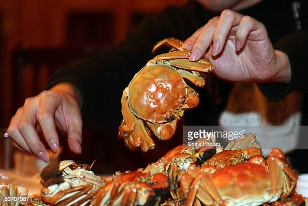 People enjoy steamed hairy crabs at a restaurant on November 15 2008 in Kunshan of Jiangsu Province China Hairy crabs a Shanghai delicacy are...