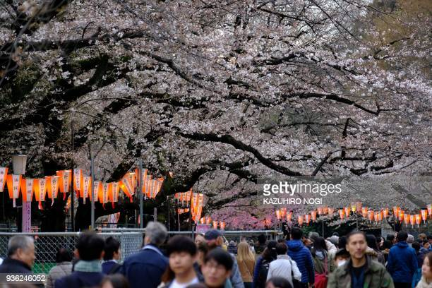 People enjoy strolling under cherry blossoms in full bloom at Tokyo's Ueno Park on March 22 2018 / AFP PHOTO / Kazuhiro NOGI