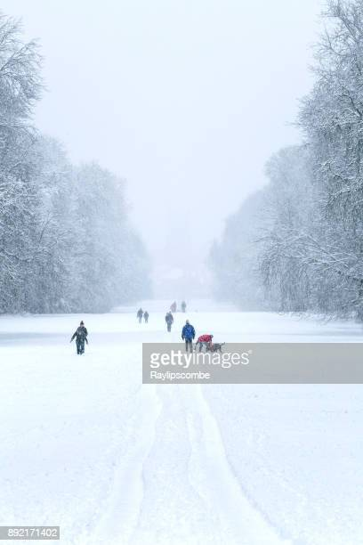 people enjoying a fresh fall of deep snow walking through a winter wonderland in cirencester park, gloucestershire, england - cirencester stock pictures, royalty-free photos & images
