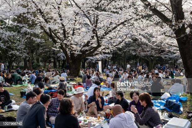 People enjoying the cherry blossom party during the corona virus pandemic Although the government had suggested no gatherings for cherry blossom this...