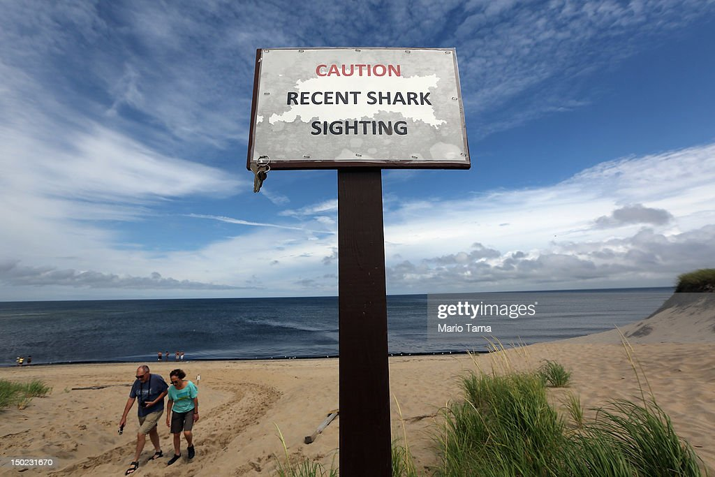 Increased Shark Sightings Along Cape Cod Coast Linked To Seal Population Growth : News Photo