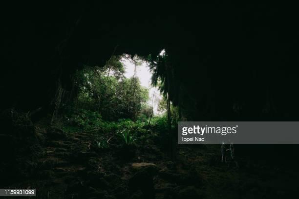 people exploring jungle cave with headlamp, okinawa, japan - 熱帯雨林 ストックフォトと画像