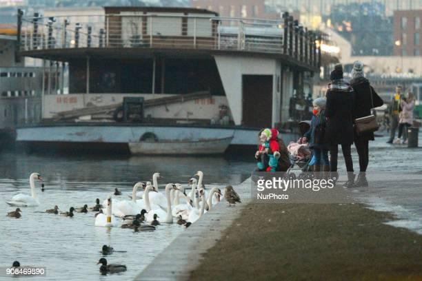 People feed ducks and swans near Vistula river On Sunday 21 January 2018 in Krakow Poland
