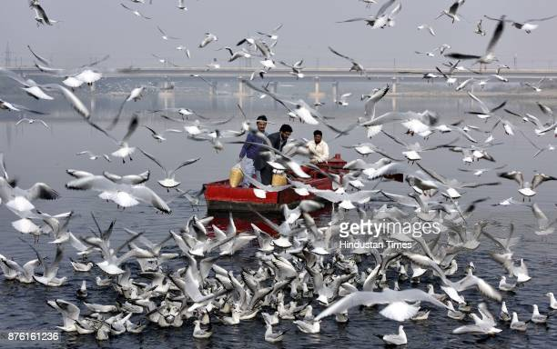 People feed seagulls along the Yamuna River on a clean weather morning on November 18 2017 in New Delhi India The air was at its cleanest in a month...