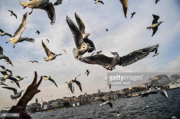 People feed seagulls flying behind a ferry on The Bosphorus as the sun shines in Istanbul on January 4 2018 / AFP PHOTO / Bulent Kilic