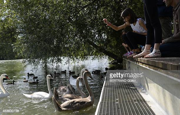 People feed swans on the Marne river, in Le Perreux-sur-Marne, east of Paris, on August 14, 2014. AFP PHOTO / BERTRAND GUAY