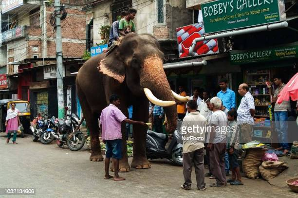 People feeding and take blessing from an elephant in the street of Guwahati city in Assam India in the eve of Ganesh Chaturthi on Wednesday Sept 12...