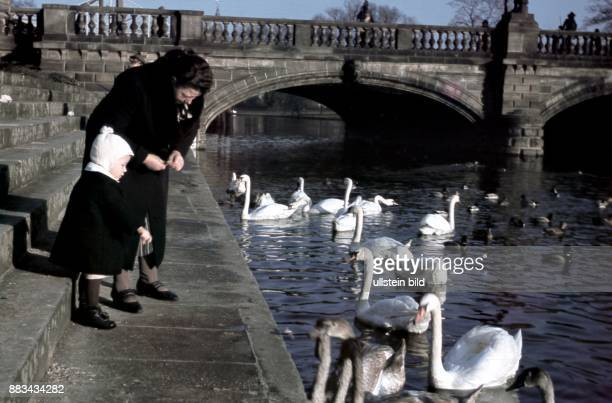 People feeding swans in Potsdam