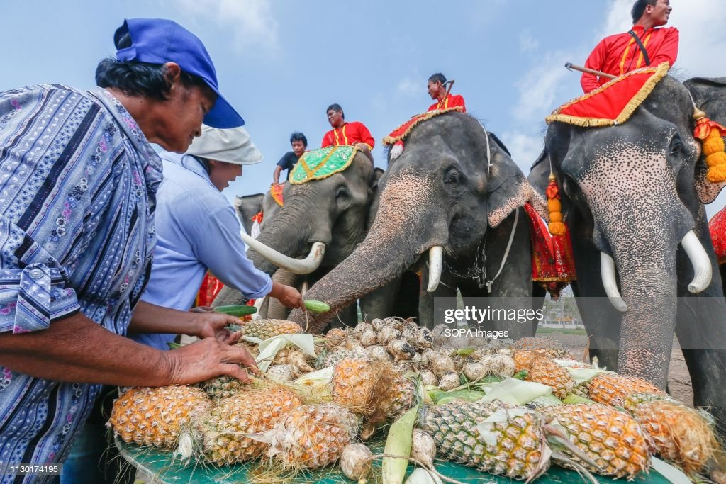 THA: Thailand's National Elephant Day Celebrations