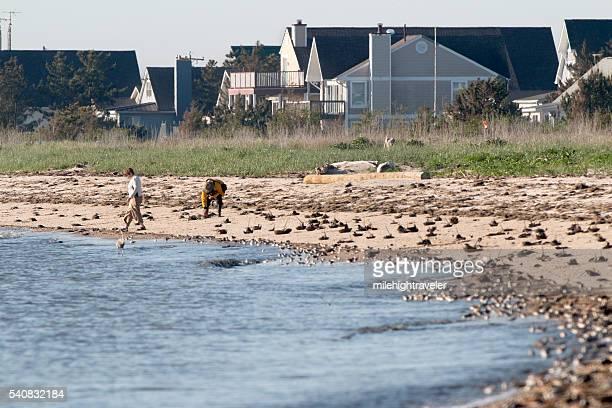 People flip stranded horseshoe crabs Slaughter Beach homes Delaware Bay