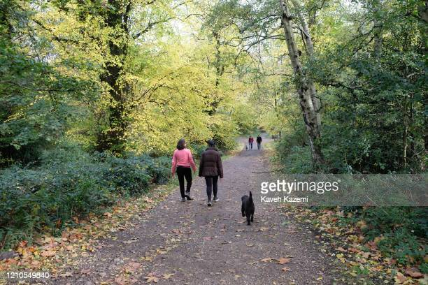 People followed by their dog walk in the bush on a Sunday in Hampstead Heath park on November 3 2019 in London United Kingdom