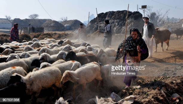 People from border villages move with their livestock to safer place during a heavy shelling from the Pakistani side of the border at Jora Farm on...