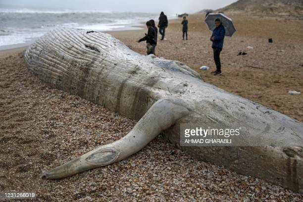 People gather around a dead fin whale that washed ashore on a beach in the southern Israeli city of Ashkelon on February 19, 2021. - The rare...