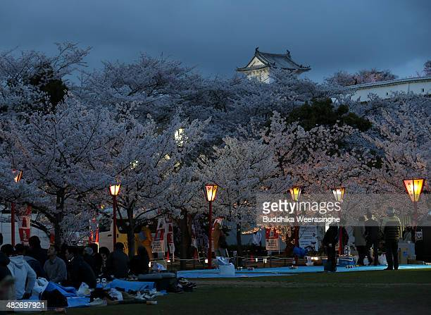 04 People gather to enjoy under illuminated cherry blossom trees in full bloom at Himeji Castle park on April 4 2014 in Himeji Japan Himeji castle...