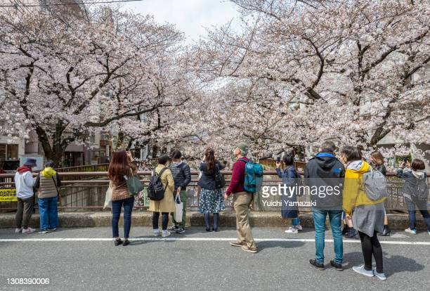 People gather to take photos during the cherry blossom bloom on March 22, 2021 in Tokyo, Japan. On March 14, the Japan Meteorological Corporation...