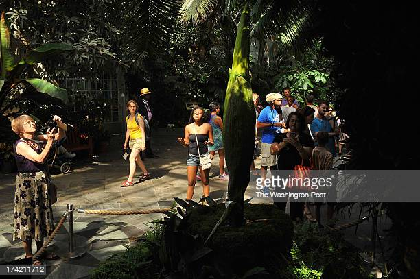 People gather to view the titan arum or corpse flower as it sits on display at the United States Botanic Garden on Sunday July 14 2013 in Washington...