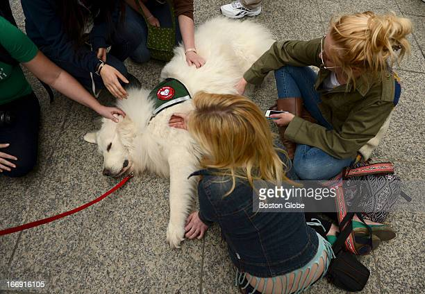 People get some pet therapy with Diffy, a five-year-old Pyrenne dog, with Pets & People and Dog Bones associations of Boston at the impromptu...