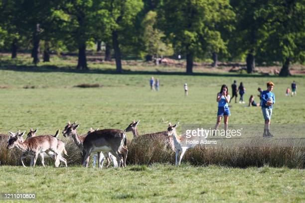People get their daily exercise in Richmond Park on April 25, 2020 in London, United Kingdom. The British government has extended the lockdown...