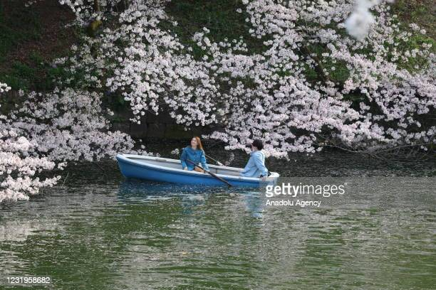 People go to park to see blooming cherry trees within an event called Hanami in Japanese amid coronavirus in Tokyo, Japan on March 27, 20201.