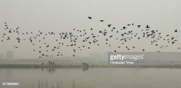 People guided by experts take a walk along the bank of river Yamuna during the third edition of the 11day Delhi Walk Festival hosted by the Delhi I...