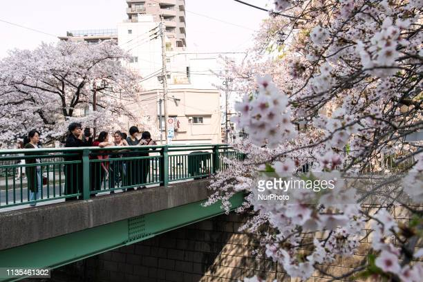 People have a view of cherry blossoms in full bloom on the bridge along the Kandagawa river in Tokyo Japan 7 Apr