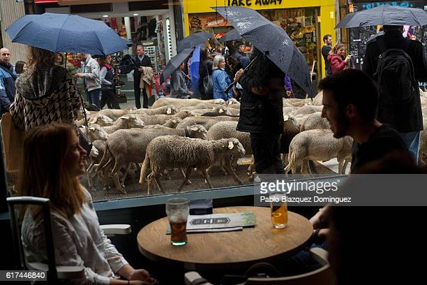 People have drinks at a bar as shepherds lead a flock of sheep along the streets of Madrid city center during the annual livestock migration festival...