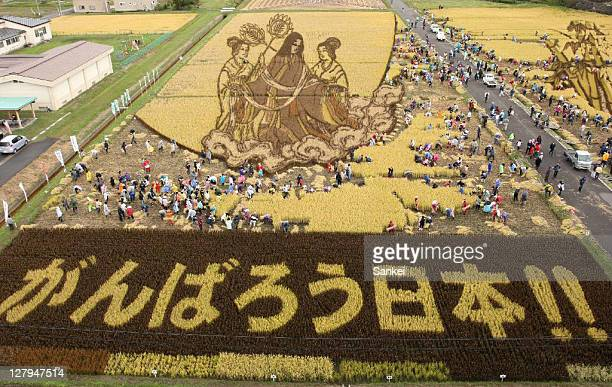 People hearvest the rice at a rice paddy art field on October 2 2011 in Inakadate Aomori Japan The art is created by planting different types of rice...