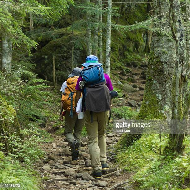 People hiking in lush mossy forest