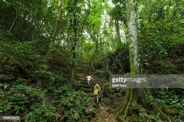 People hiking in tropical rainforest jungle