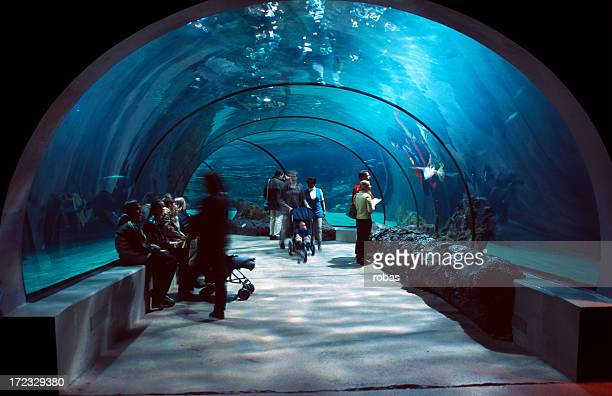 people in a water tunnel. - aquarium stock pictures, royalty-free photos & images