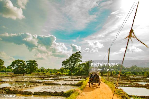 people in cart on dirt road against sky - colombo stock pictures, royalty-free photos & images